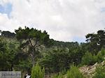 Bossen op Chios - Eiland Chios