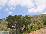 Natuur nabij Volissos foto 2 - Eiland Chios