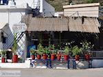 Bloempotten bij visrestaurant Emborios - Eiland Chios
